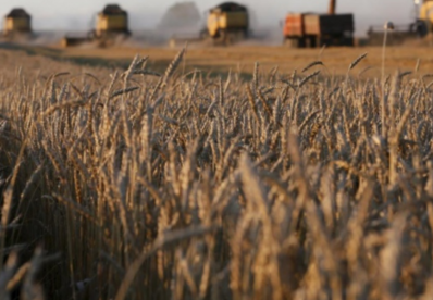 Державна продовольчо-зернова корпорація назвала причини 5 мільярдів збитків
