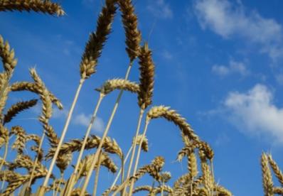 Гарант продовольчої безпеки отримав 197 млн збитків